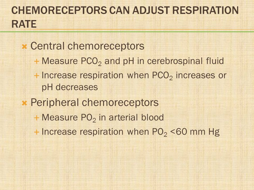 Chemoreceptors Can Adjust Respiration Rate
