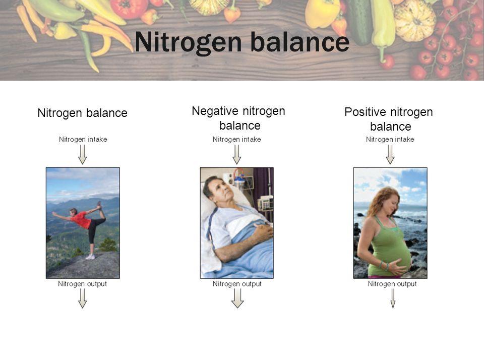 Nitrogen balance Negative nitrogen Nitrogen balance Positive nitrogen