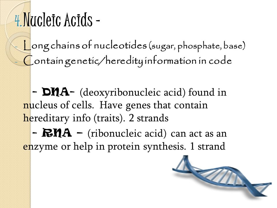 Nucleic Acids – Long chains of nucleotides (sugar, phosphate, base)