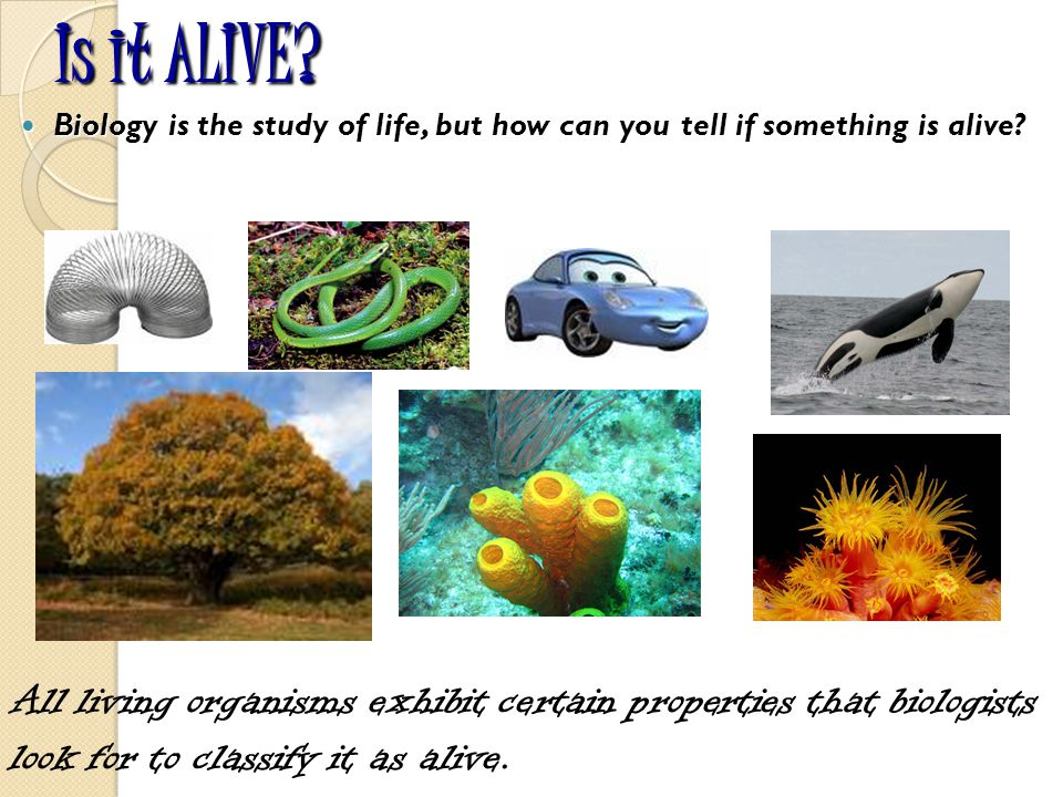 Is it ALIVE Biology is the study of life, but how can you tell if something is alive