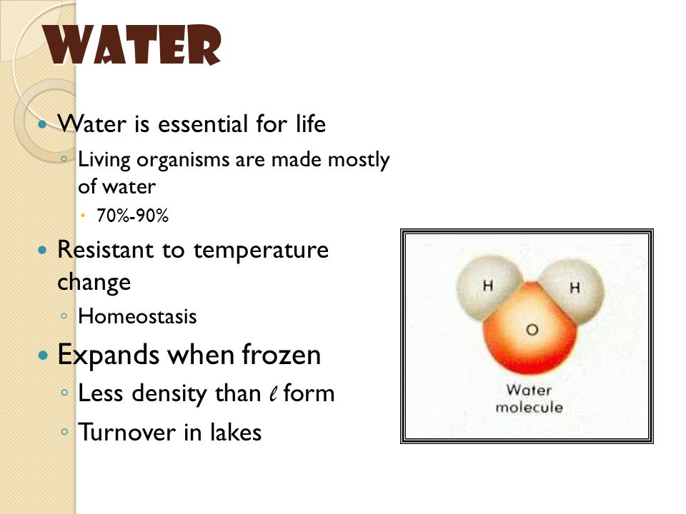 Water Expands when frozen Water is essential for life