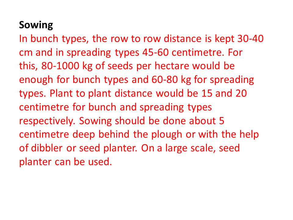 Sowing In bunch types, the row to row distance is kept 30-40 cm and in spreading types 45-60 centimetre.