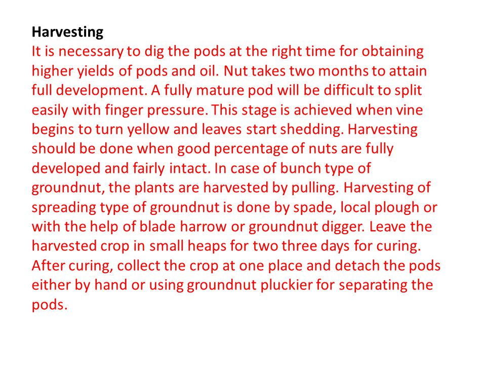 Harvesting It is necessary to dig the pods at the right time for obtaining higher yields of pods and oil.