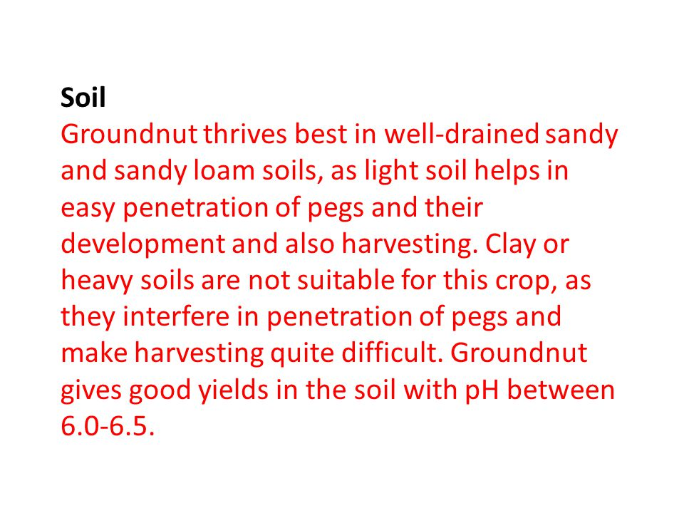 Soil Groundnut thrives best in well-drained sandy and sandy loam soils, as light soil helps in easy penetration of pegs and their development and also harvesting.