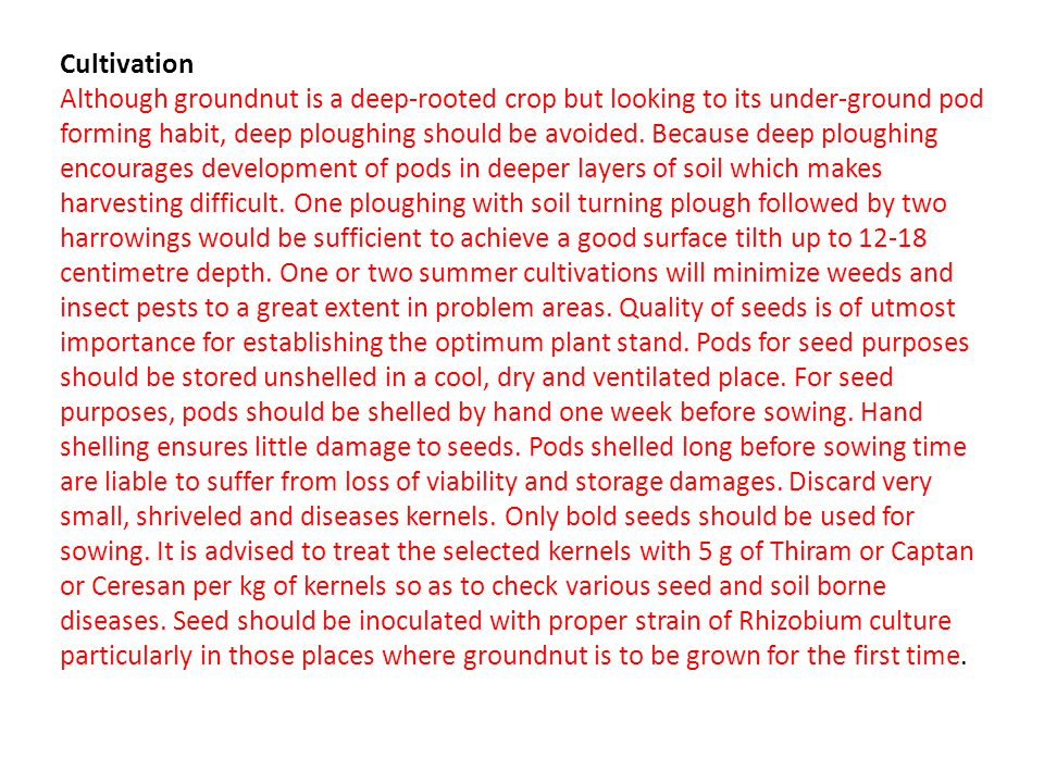 Cultivation Although groundnut is a deep-rooted crop but looking to its under-ground pod forming habit, deep ploughing should be avoided.