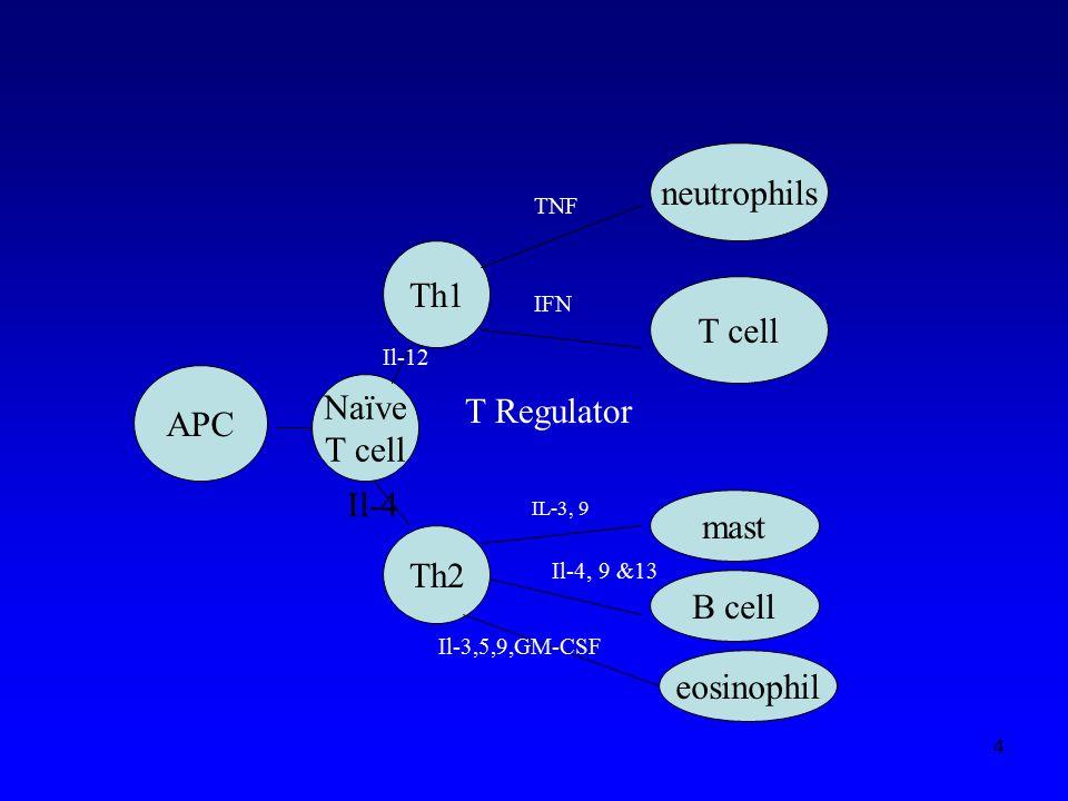 neutrophils Th1 T cell Naïve APC T Regulator T cell Il-4 mast Th2
