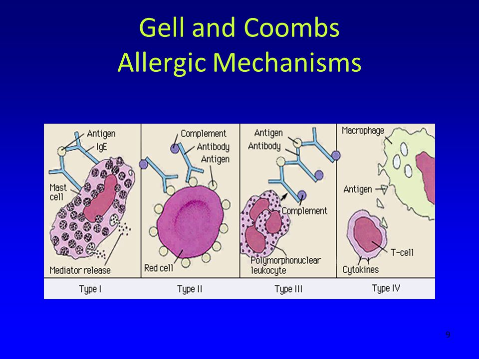 Gell and Coombs Allergic Mechanisms
