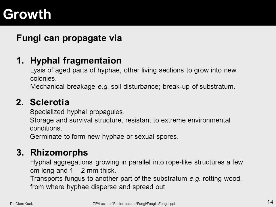 Growth Fungi can propagate via