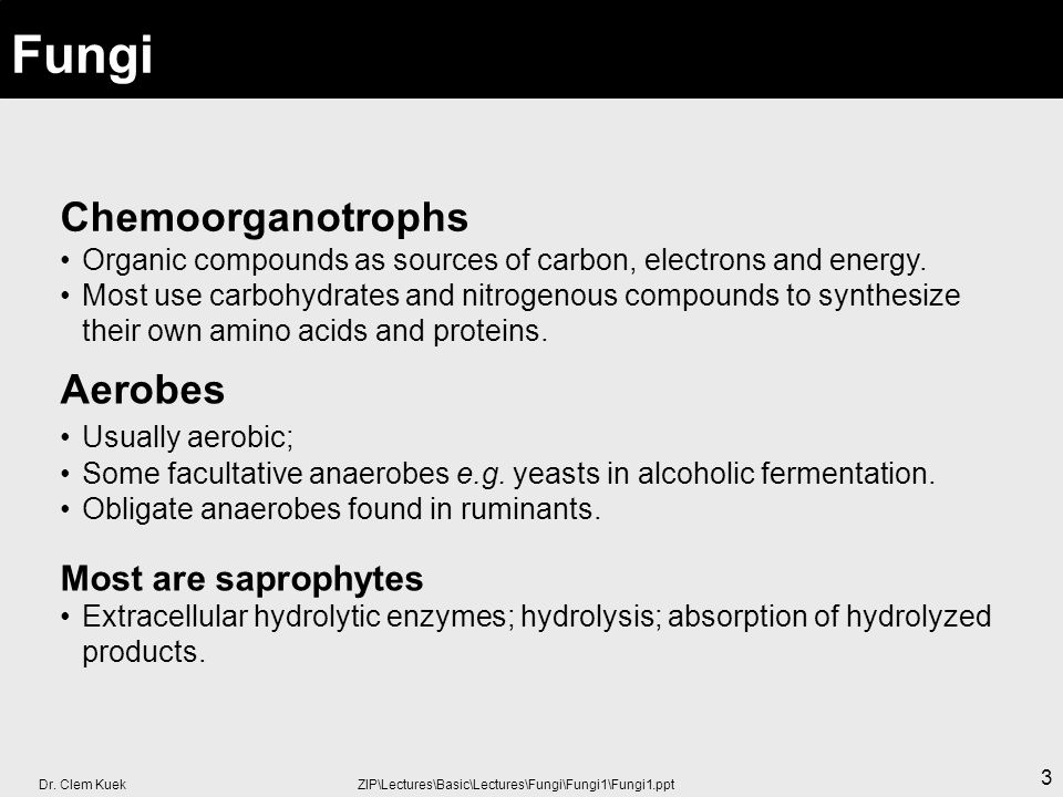 Fungi Chemoorganotrophs Aerobes Most are saprophytes