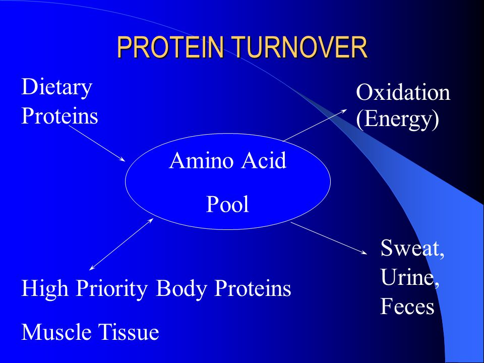 PROTEIN TURNOVER Dietary Proteins Oxidation (Energy) Amino Acid Pool