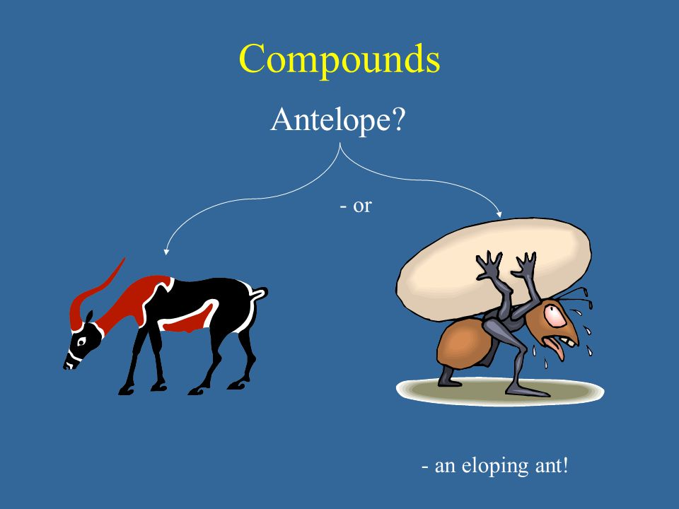 Compounds Antelope - or - an eloping ant!
