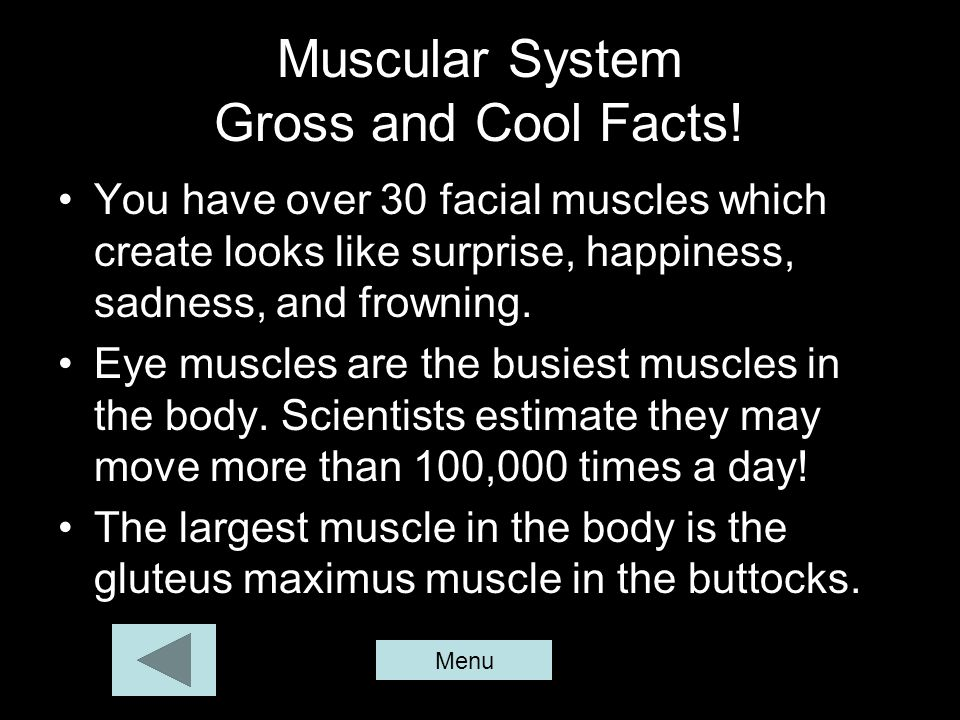 Muscular System Gross and Cool Facts!