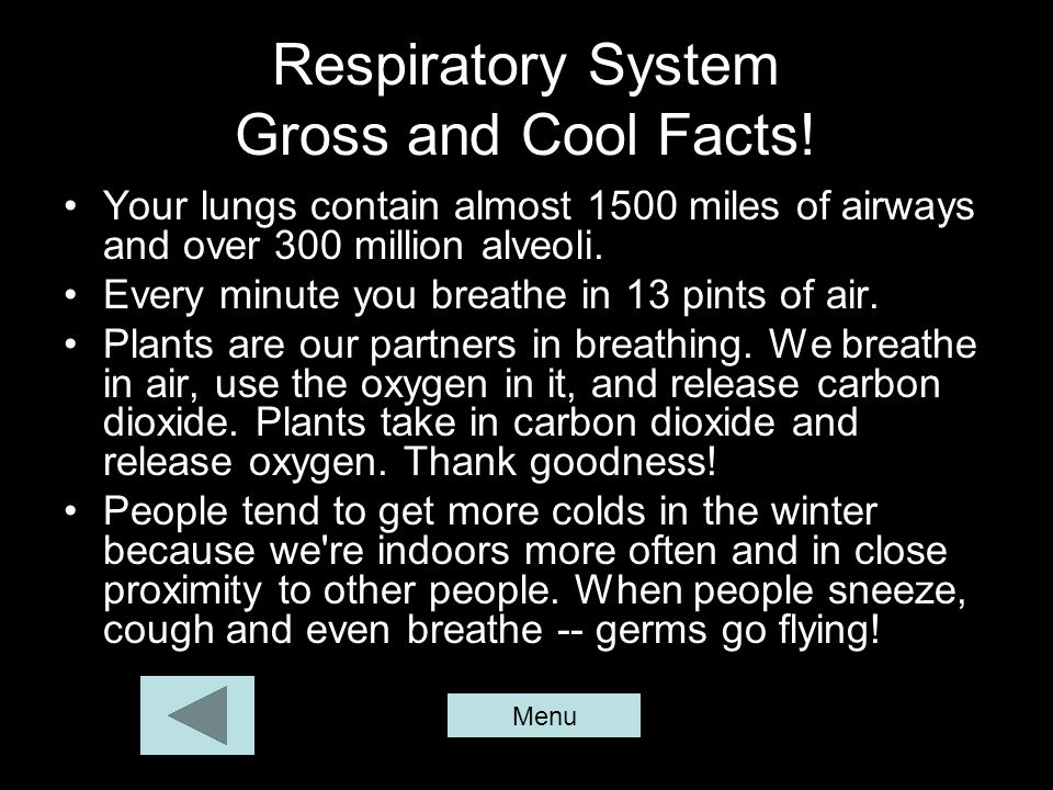 Respiratory System Gross and Cool Facts!