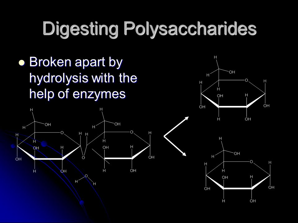 Digesting Polysaccharides
