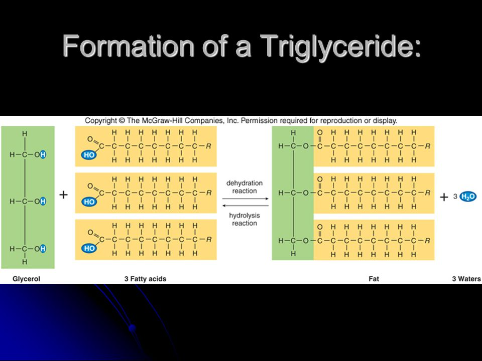 Formation of a Triglyceride: