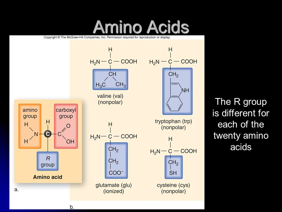 The R group is different for each of the twenty amino acids