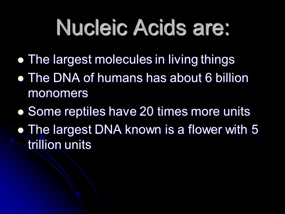 Nucleic Acids are: The largest molecules in living things