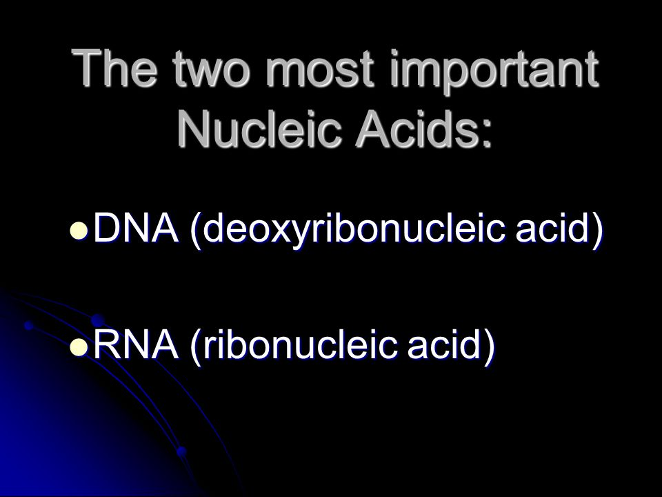 The two most important Nucleic Acids:
