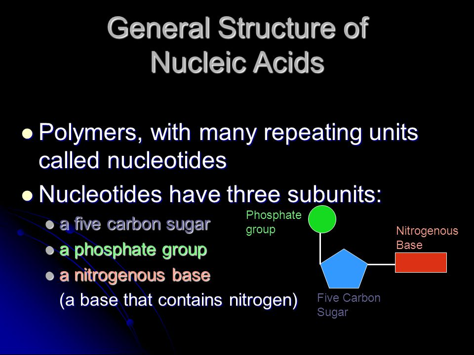 General Structure of Nucleic Acids