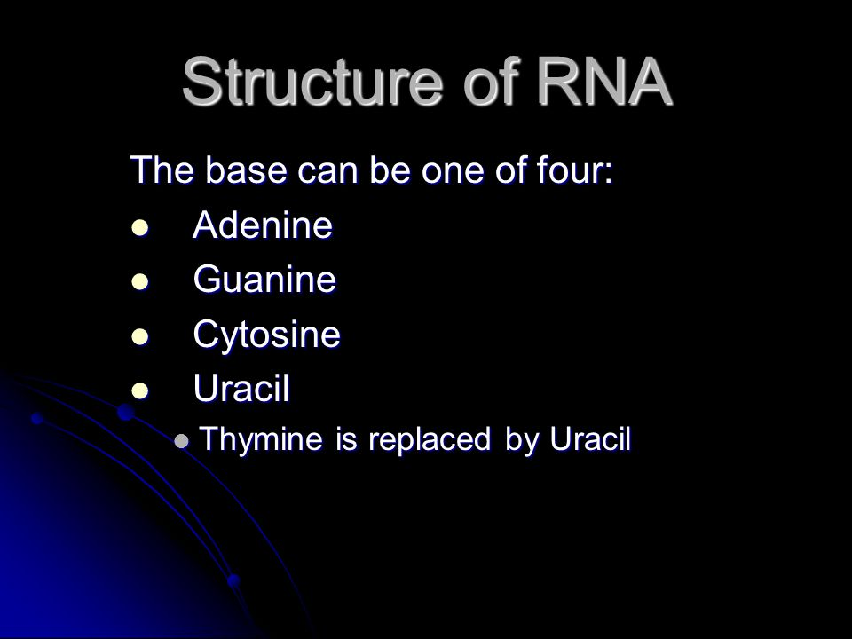 Structure of RNA The base can be one of four: Adenine Guanine Cytosine