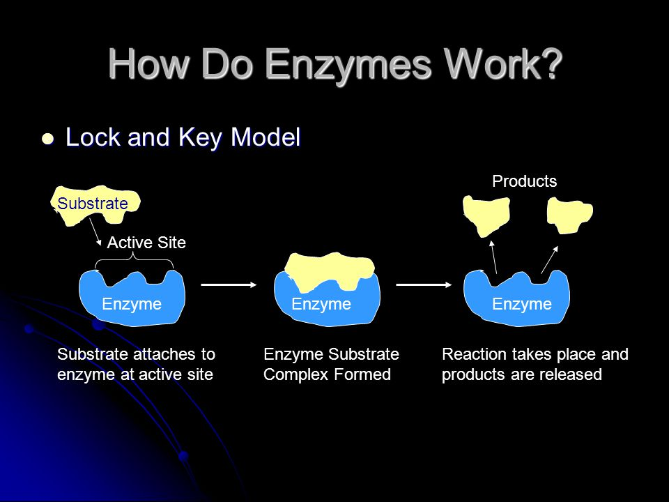 How Do Enzymes Work Lock and Key Model Products Substrate Active Site