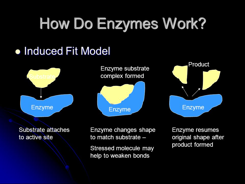 How Do Enzymes Work Induced Fit Model Product