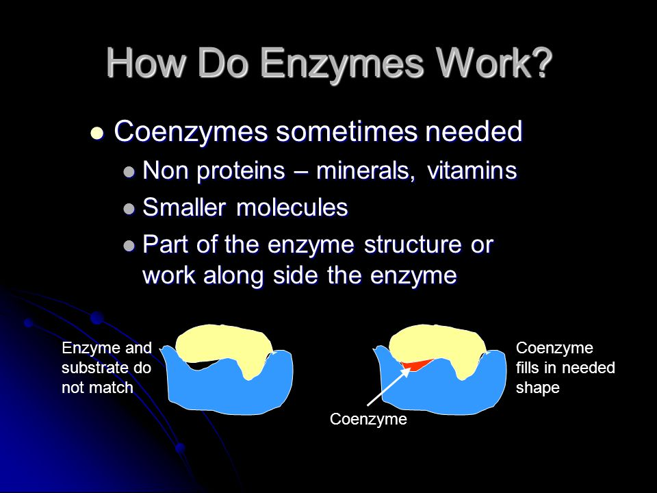 How Do Enzymes Work Coenzymes sometimes needed