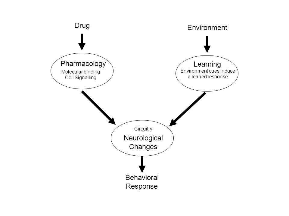 Drug Environment Pharmacology Learning Neurological Changes