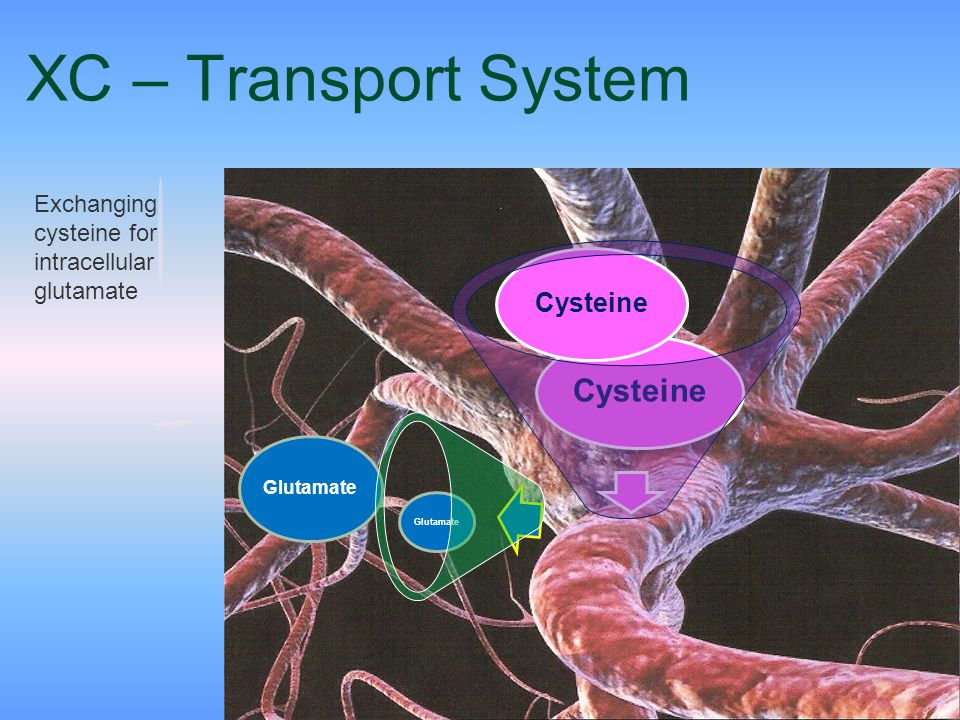 XC – Transport System Exchanging cysteine for intracellular glutamate