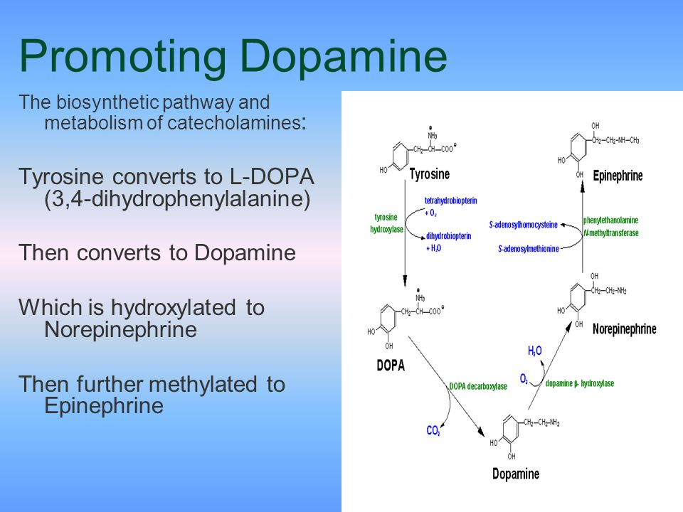 Promoting Dopamine The biosynthetic pathway and metabolism of catecholamines: Tyrosine converts to L-DOPA (3,4-dihydrophenylalanine)