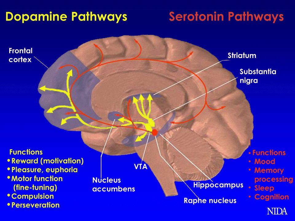 Promoting Dopamine