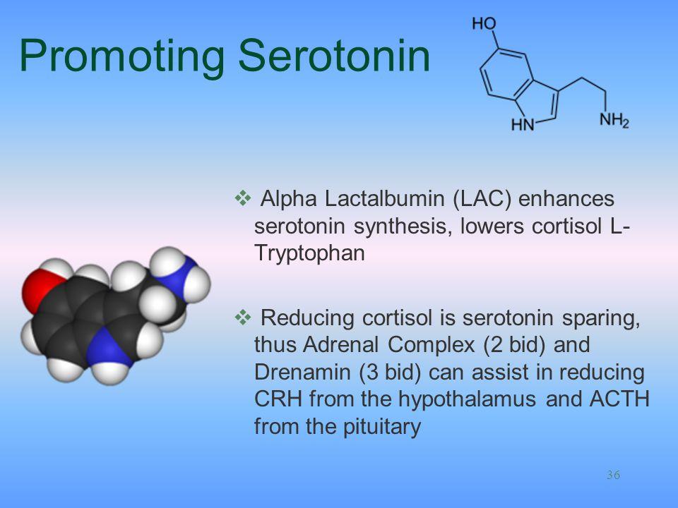 Promoting Serotonin Alpha Lactalbumin (LAC) enhances serotonin synthesis, lowers cortisol L-Tryptophan.