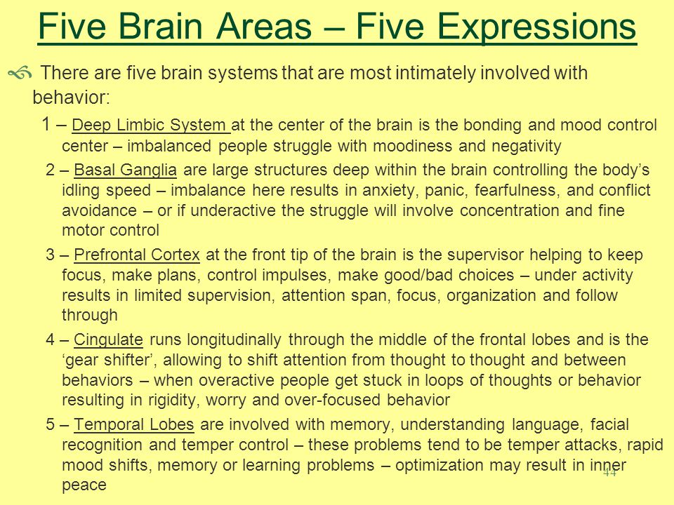 Five Brain Areas – Five Expressions