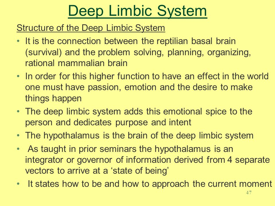 Deep Limbic System Structure of the Deep Limbic System