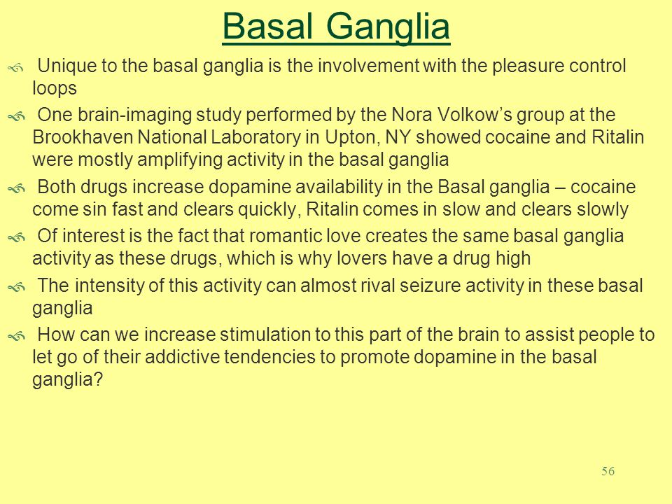 Basal Ganglia Unique to the basal ganglia is the involvement with the pleasure control loops.