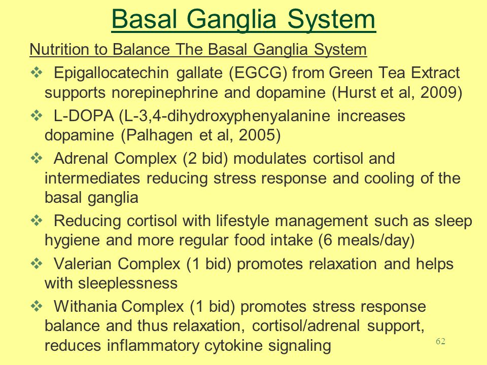 Basal Ganglia System Nutrition to Balance The Basal Ganglia System