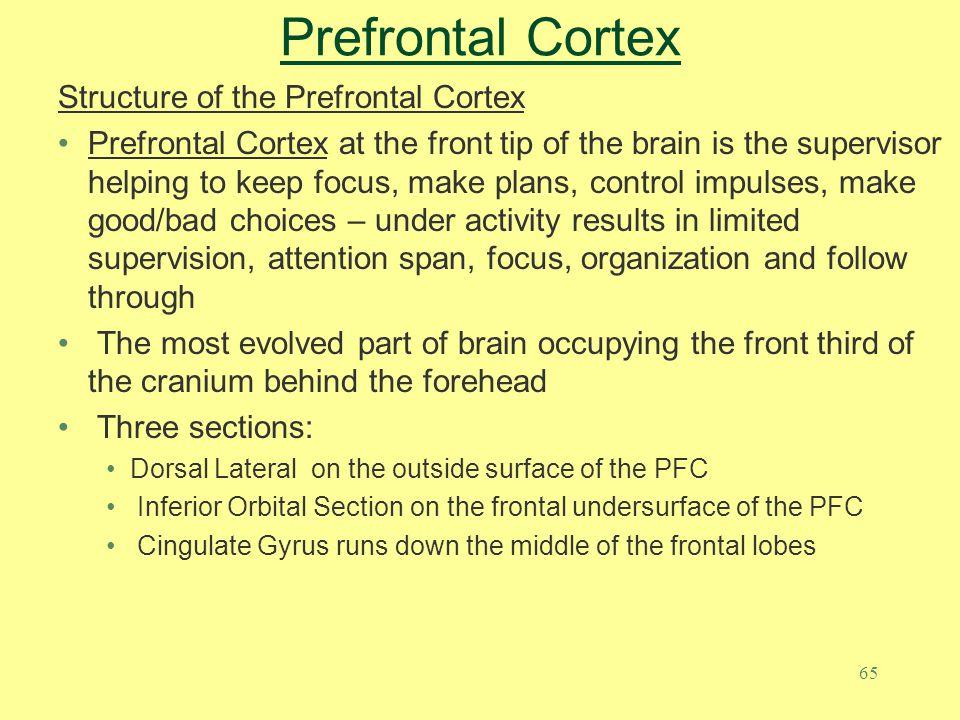 Prefrontal Cortex Structure of the Prefrontal Cortex