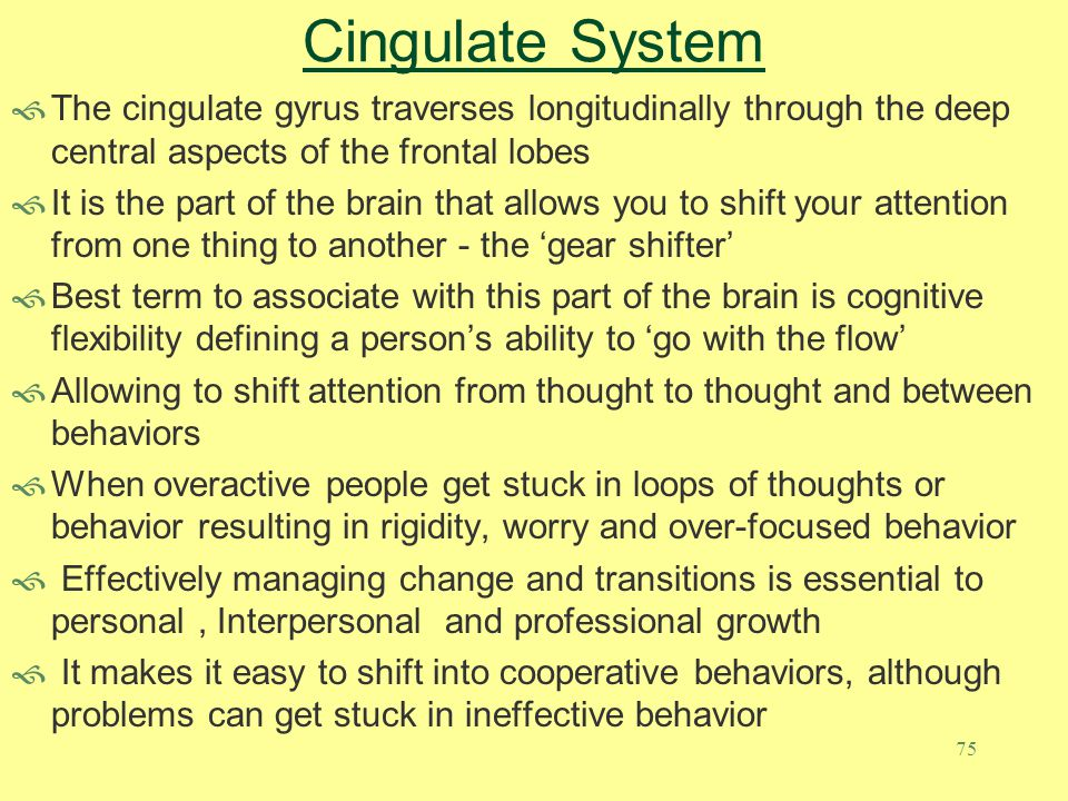 Cingulate System The cingulate gyrus traverses longitudinally through the deep central aspects of the frontal lobes.