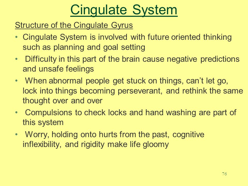 Cingulate System Structure of the Cingulate Gyrus