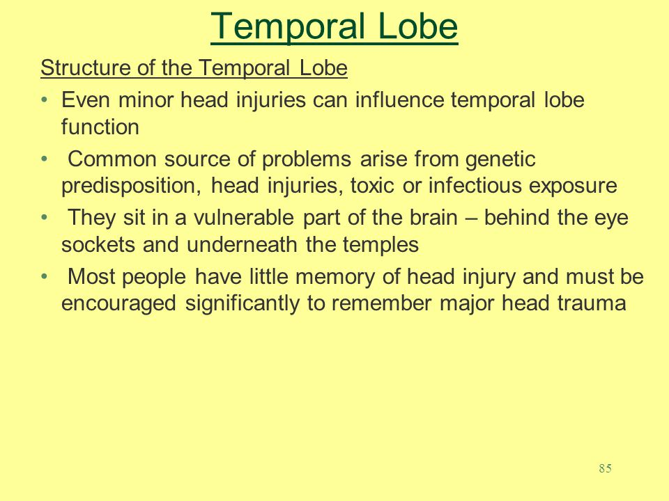 Temporal Lobe Structure of the Temporal Lobe