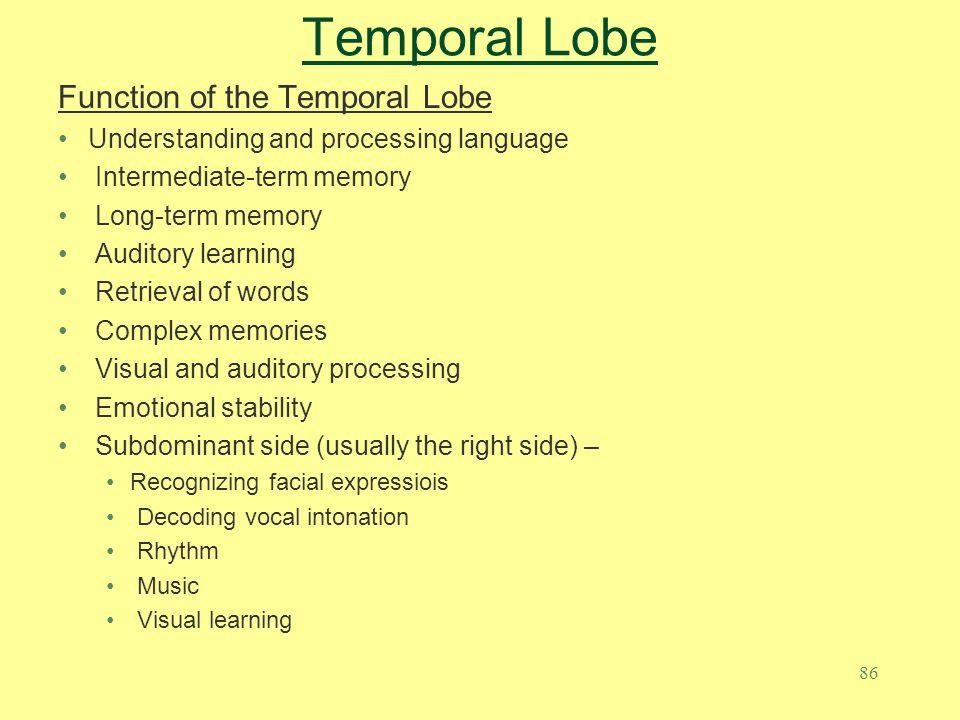 Temporal Lobe Function of the Temporal Lobe