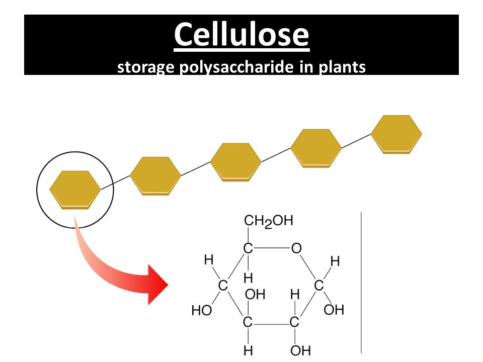Cellulose storage polysaccharide in plants