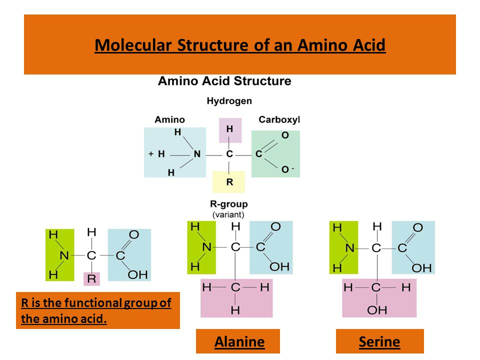 Molecular Structure of an Amino Acid