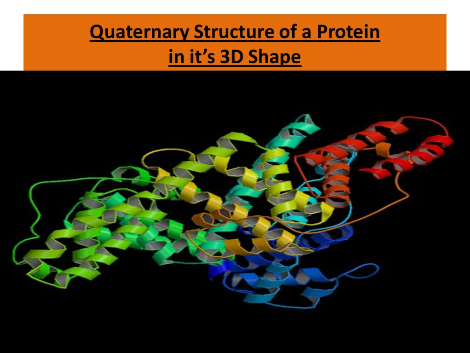 Quaternary Structure of a Protein in it's 3D Shape