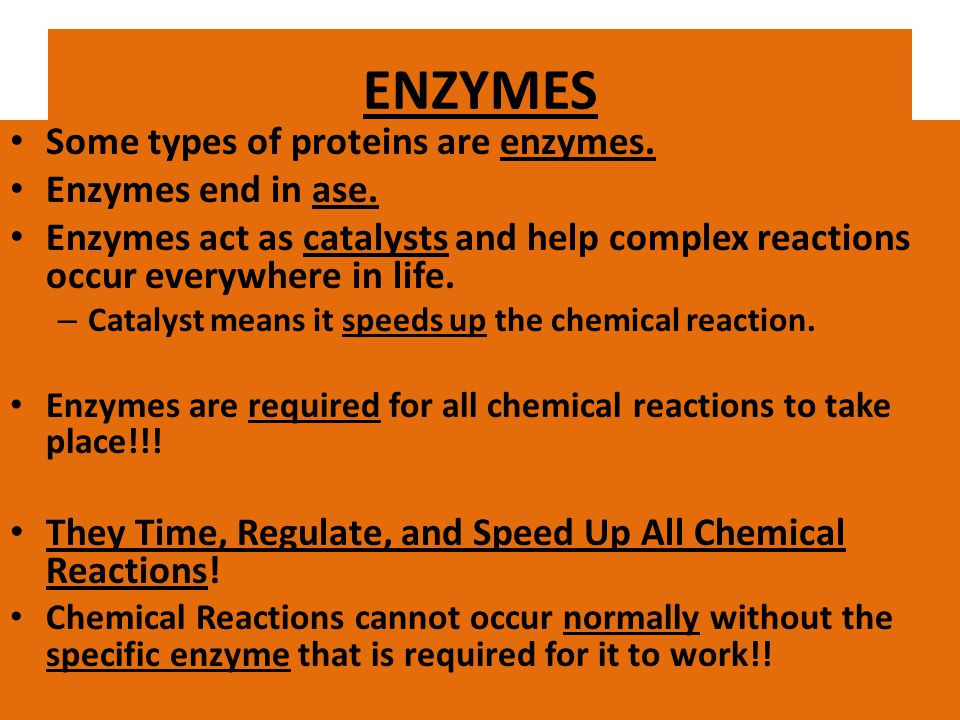 ENZYMES Some types of proteins are enzymes. Enzymes end in ase.