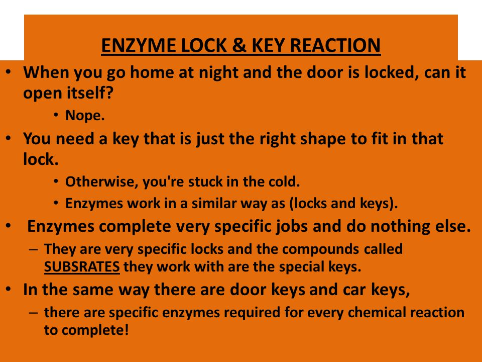 ENZYME LOCK & KEY REACTION