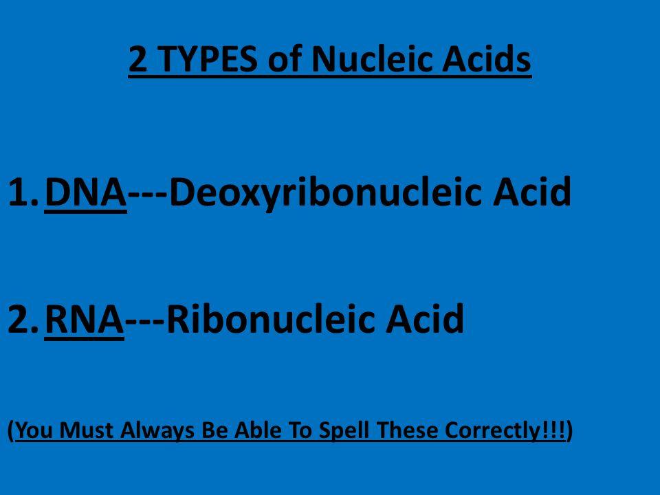 DNA---Deoxyribonucleic Acid RNA---Ribonucleic Acid