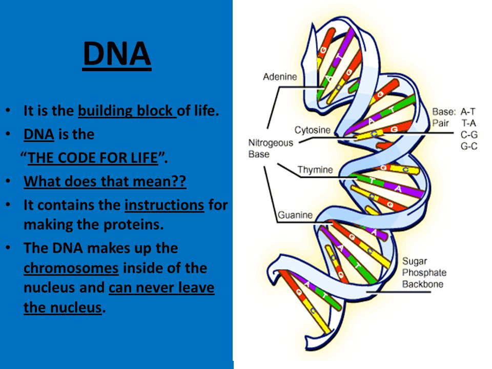 DNA It is the building block of life. DNA is the THE CODE FOR LIFE .