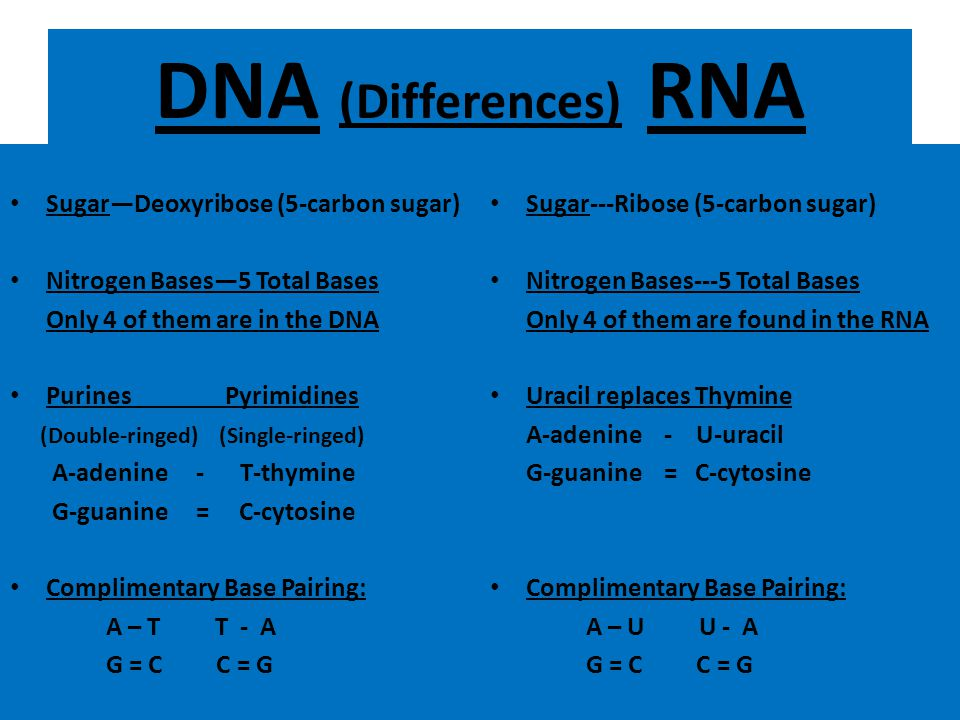 DNA (Differences) RNA Sugar—Deoxyribose (5-carbon sugar)