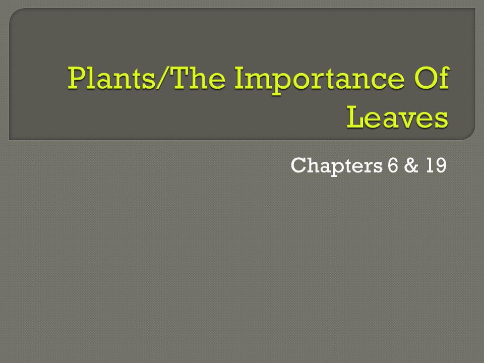 Plants/The Importance Of Leaves
